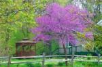 Terradise garden tour, yard and plant sale set for Sunday