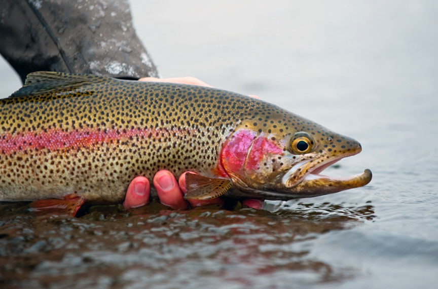 Quarry park lake to be stocked with around 1 000 rainbow for Trout fishing in ohio