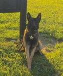 Sheriff's Office K9 Taz to get body armor thanks to donation
